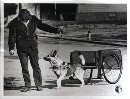 Image: di00610 - Ronald Lewis (35) out training his dog