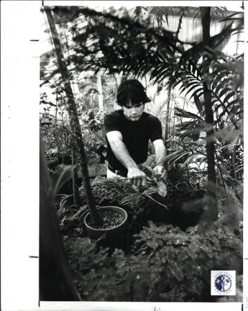 Image: di00798 - Patrick Applegarth-19, Ft. Mitchell, Jr. Bio major, in charge of green house, cutting back a