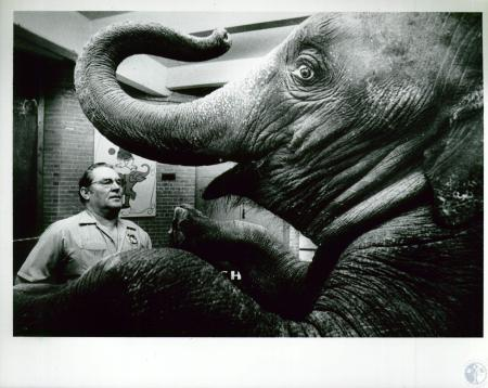 Image: di10189 - Cecil Jackson, animal trainer for Cincinnati Zoo, and elephant