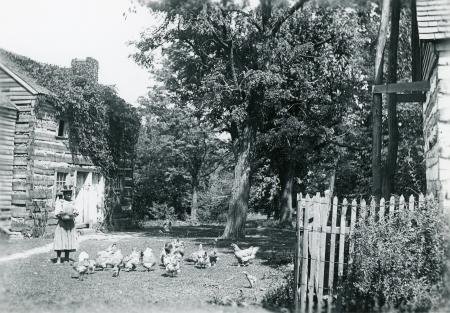 Image: di126441 - Winston family back yard. Young black girl feeding chickens.