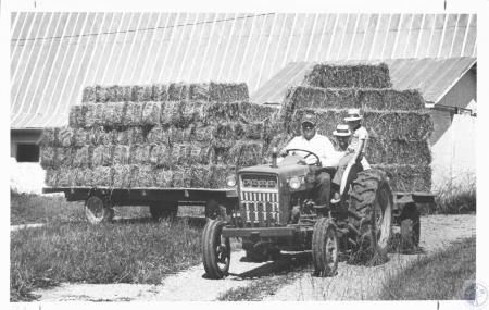 Image: di14035 - Ray Dusch, Bill Ed Garnett, Timmy Glore (7) moving a double wagonload of hay to another location on farm....