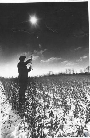 Image: di14275 - Nick Domaschko inspects soybeans in field uable to harvest due to weather