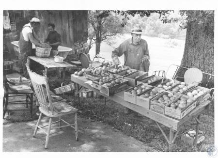 Image: di14277 - Joe W. Bill (69) selling tomatoes