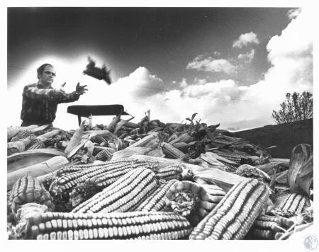 Image: di14279 - Harold Hempfling loading feed corn for livestock at Valley Orchard