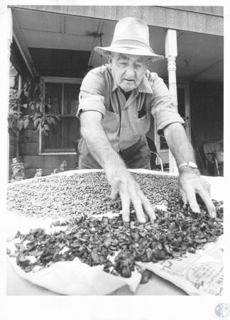 Image: di14282 - Mr. Adams (74) with dried beans and apples