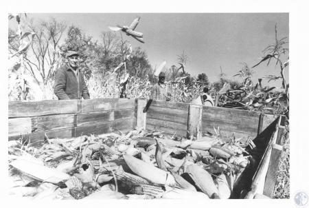 Image: di14283 - Leroy Garnett and Jim Craddock handpicking corn