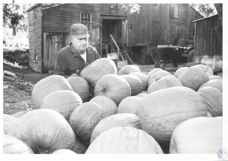 Image: di14284 - Leroy L. Dolwick (53) with his harvest of pumpkins