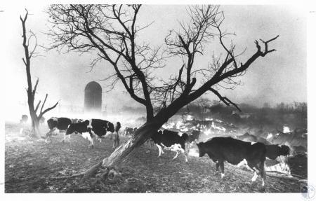 Image: di14632 - Foltz Dairy Farm