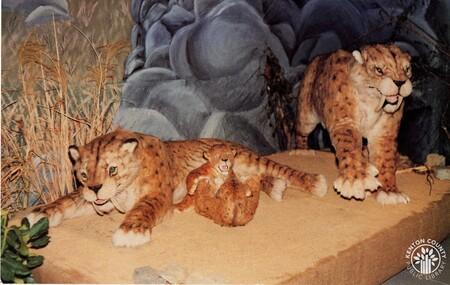 Image: di140442 - Postcard of Saber Tooth Cat family at Behringer-Crawford Museum.