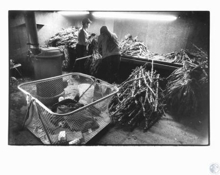 Image: di18875 - George Gripshover and Rose Marie Dearing (21) stripping tobacco as Michael Joseph Dearing (15 months)....