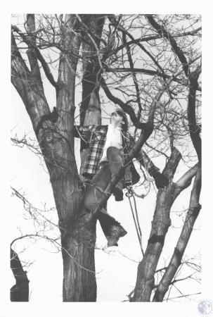 Image: di19722 - Keith Mullins trimming trees