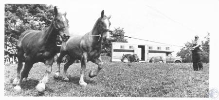 Image: di20001 - Bobby Steele, Harrodsburg, KY at Kenton County Fair