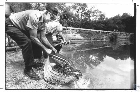 Image: di22638 - Rupert Oney (61) stocking lake with fish