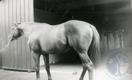 Image: di48809 - Unidentified horse