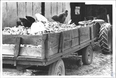 Image: di58921 - On farm of Richard Wyatt (28)