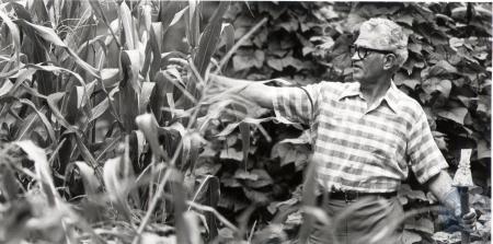 Image: di76016 - Unidentified man looking at his corn stalks.