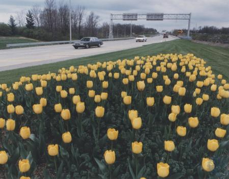 Image: di80359 - Tulips greet traffic arriving at the main entrance to the airport