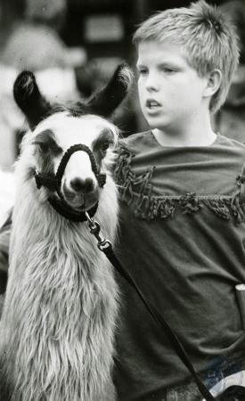 Image: di83227 - Jimmy Abbatiello (11) of Dayton, keeps pewter, an Alpaca Llama on a tether at Wool Festival.