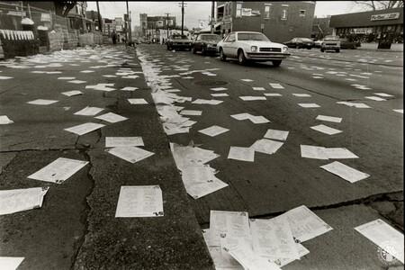 Image: di95120 - Litter - 2nd near Saratoga