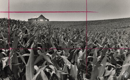 Image: di96456 - Field of corn at a farm in Campbell County off Route 8.