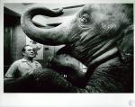 di10189 - Cecil Jackson, animal trainer for Cincinnati ...