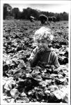 di53810 - Paul Ratcliff (4) eating strawberries at ...