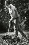 di88068 - Greg Haas (16) raking leaves at his grandparent's ...