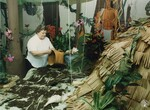 di97045 - Jean Ammon works on the rain forest display ...